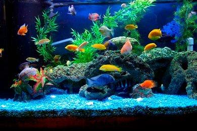 Аквариумные рыбки для начинающих