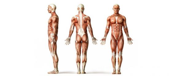 перенапряжение мышц после тренировок