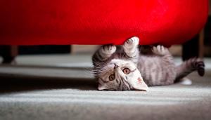 Как отучить кота драть мебель?