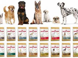 Почему Royal Canin лучший выбор для вашего питомца