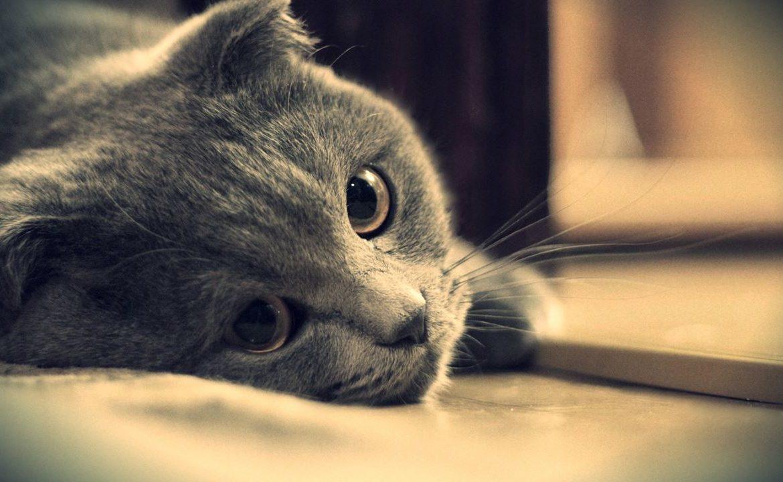 У кота недомогание