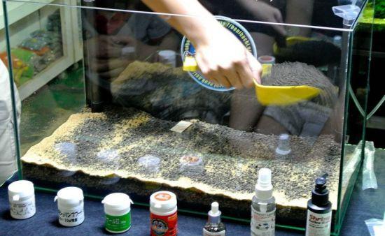 Выбор грунта для аквариума