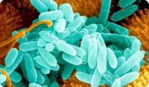 Как бороться с инфекцией в организме