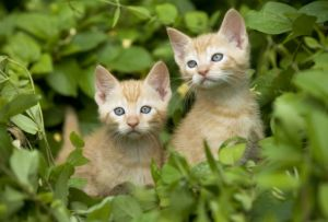 Как правильно ухаживать за семейством кошачьих?