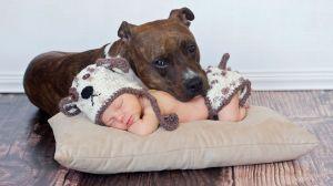 Уживутся ли дети и животные в одном доме?