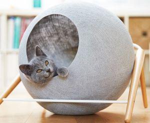 Где поставить лежак для кошки