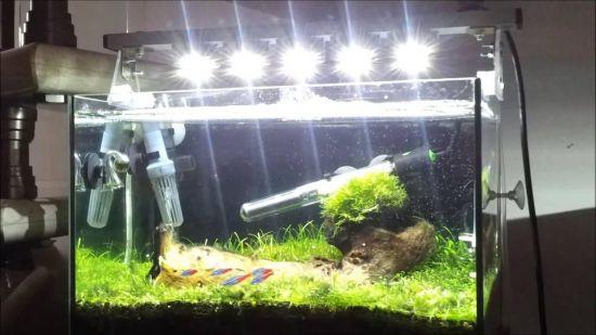 Свет и углекислый газ в аквариуме