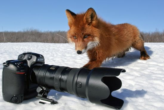 Фотосъёмка животных. Советы