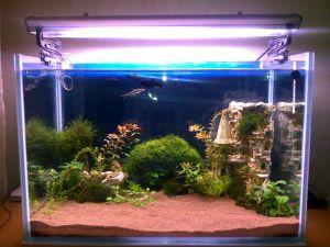 Основы декорации аквариума