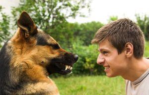 Типы поведения собак и их хозяевов