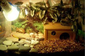 Террариум для сухопутных черепах
