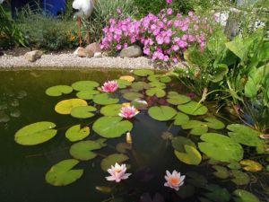 Как оформить дно садового пруда