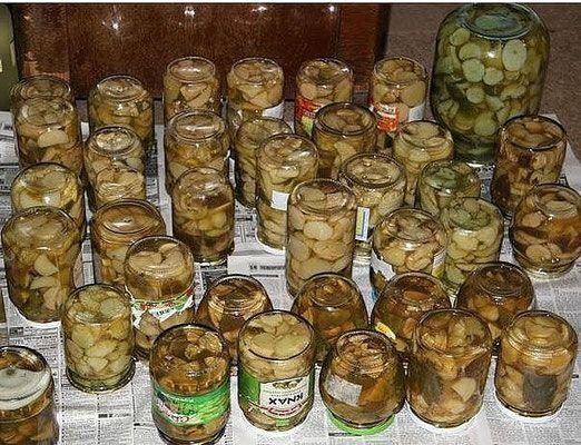 Потрясающая домашняя заготовка на зиму из лесных грибов