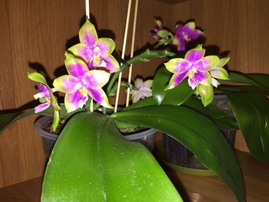 Природные орхидеи