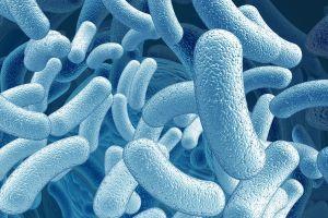 Как принимать антибиотики и пробиотики