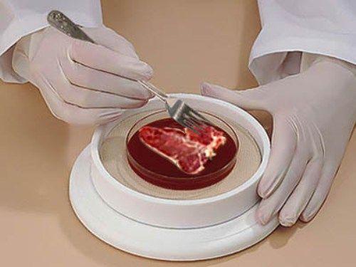 Польза от крови животных