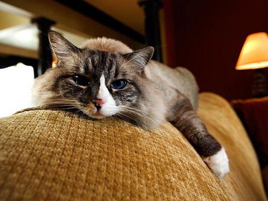 Зачем в доме кошка