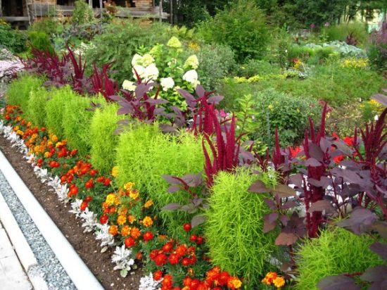 Правила выбора растений
