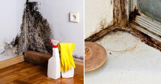 Как устранить сырость в доме