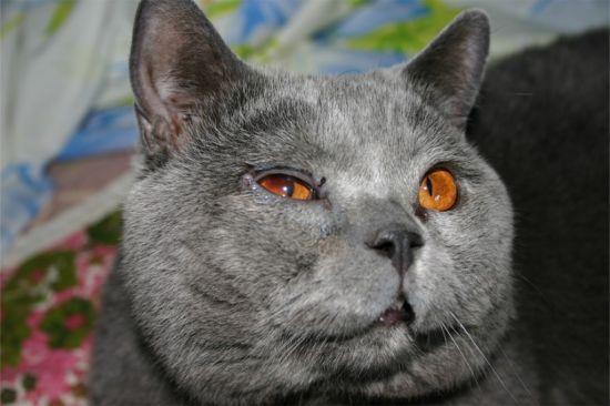 Почему у кошки слезятся глаза и выпадает шерсть
