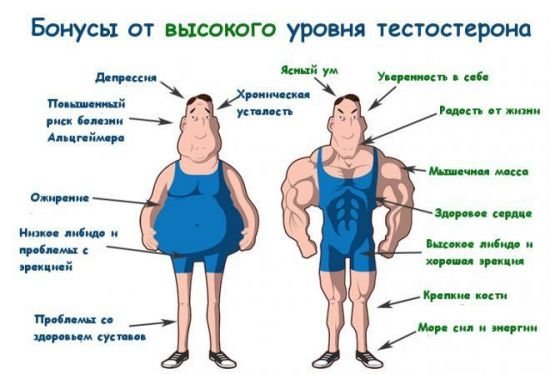 Что такое тестостерон