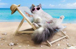Советы по безопасности собак и кошек летом