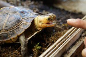 Среда обитания земноводных черепах в домашних условиях