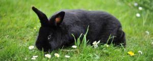 Как организовать пространство кроликов