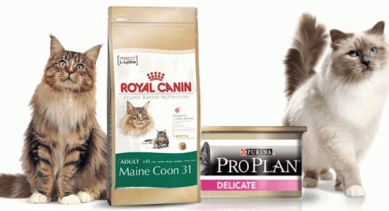 Разница между сухими и консервированными кормами для котов